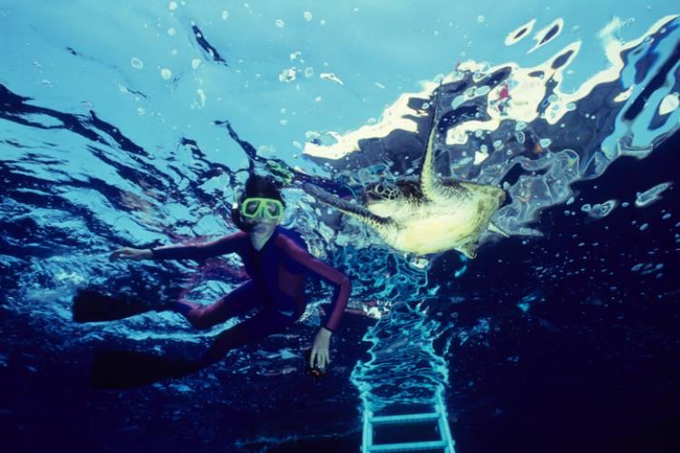 Snorkeling at Turtle Reef Maui | Paradise Activities | Maui Resorts