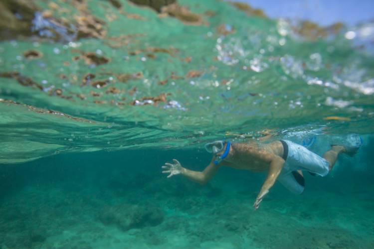 Molokini & Turtle Town Snorkeling | Paradise Activities | Maui Resorts