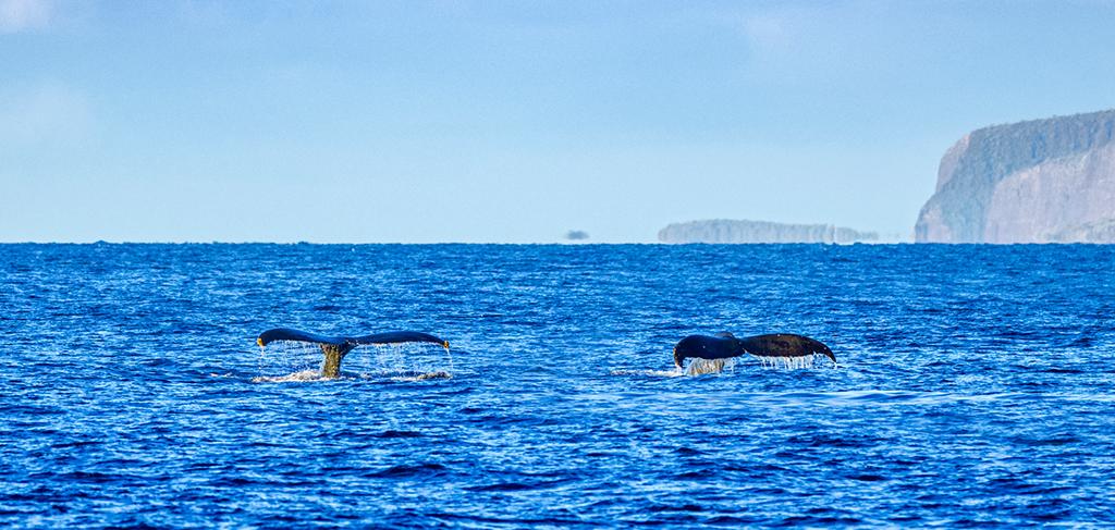 Whale Watching Maui | Maui Info | Sullivan Properties