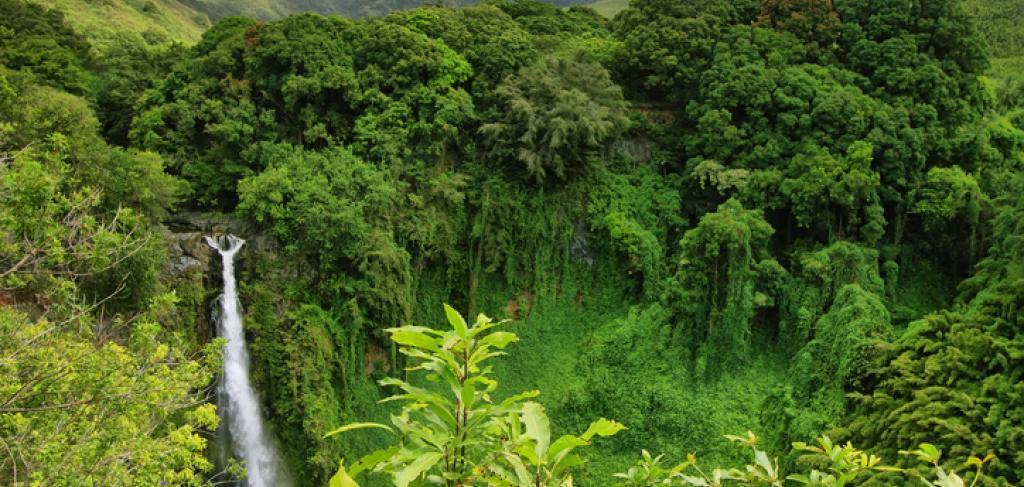 Maui Waterfall Adventure | Paradise Activities | Maui Resorts