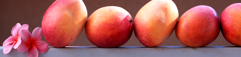 Mango Season on Maui | Maui Vacation Blog | Maui Resorts